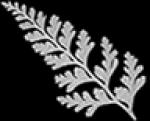 Blätter von Bäumen oder anderen Pflanzen