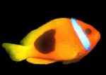 Fische Teil 1