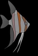 Noch mehr: weitere Fische (Teil2)