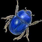 Käfer (Marienkäfer, Mistkäfer)