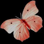 Schmetterlinge Teil 1