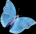 Schmetterlinge Teil 2